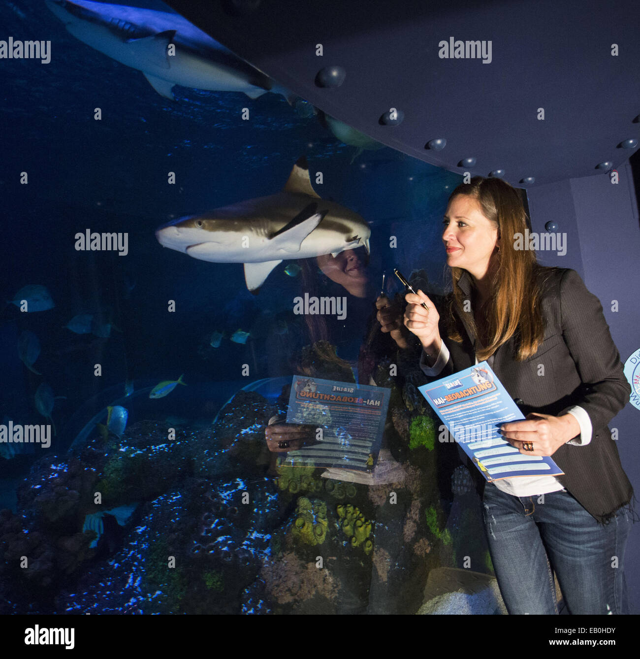 Dana Schweiger has become a 'shark watcher' at SeaLife. Members of the public observe sharks at the various - Stock Image