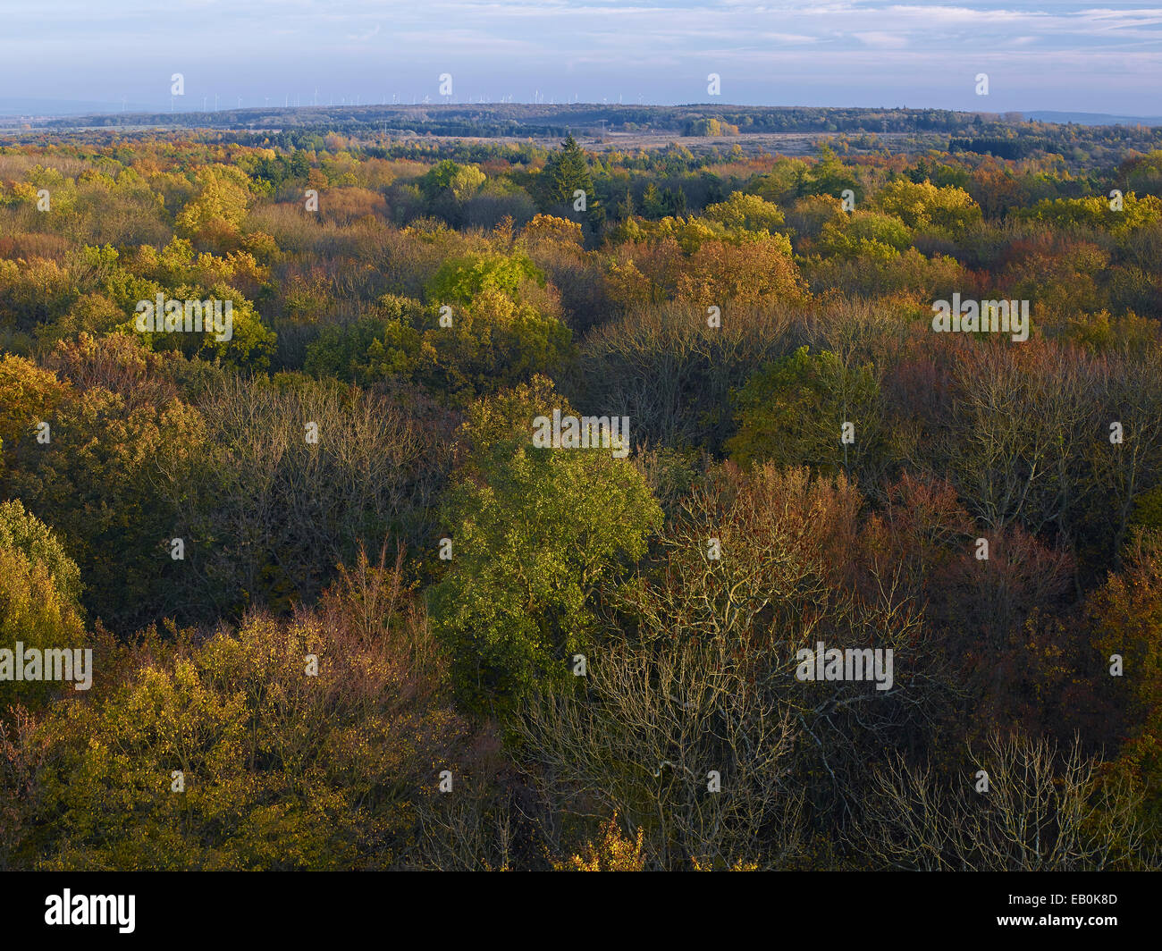 View over the Hainich from the treetop walkway, Germany - Stock Image