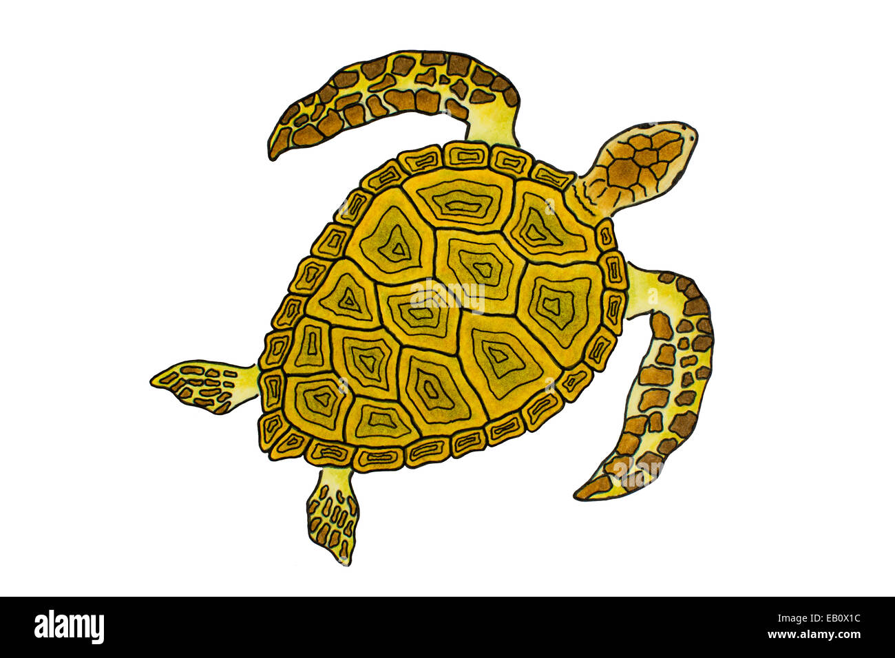 isolated sea turtle drawing stock photo 75623112 alamy