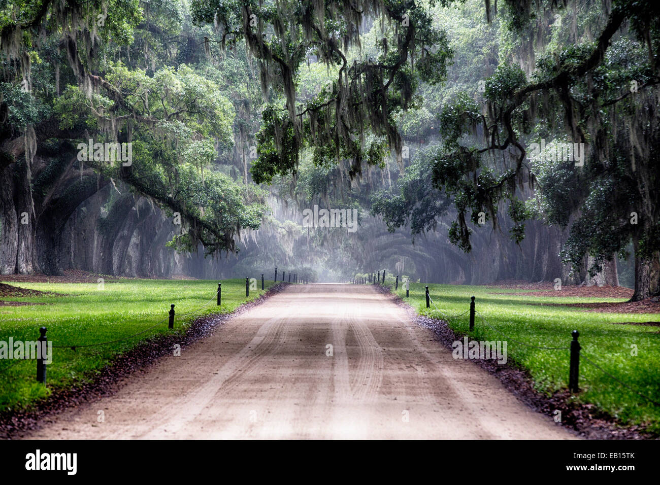 Oak Trees Branching Over a Country Road, Avenue of Oaks, Boone Hall Plantation, Mt Pleasant, South Carolina - Stock Image