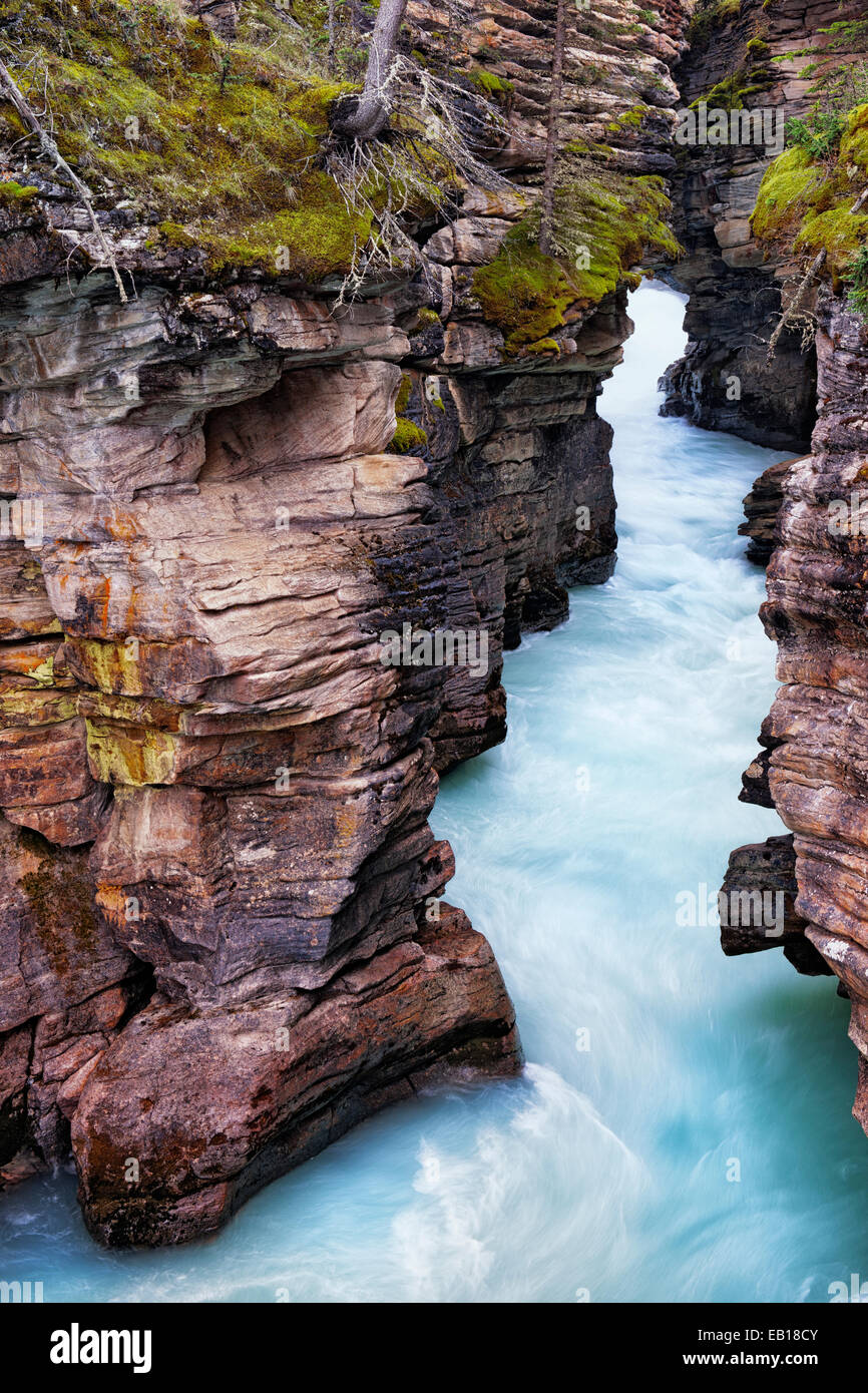 The Upper Athabasca River rushes through its carved out limestone gorge in Alberta's Canadian Rockies and Jasper - Stock Image