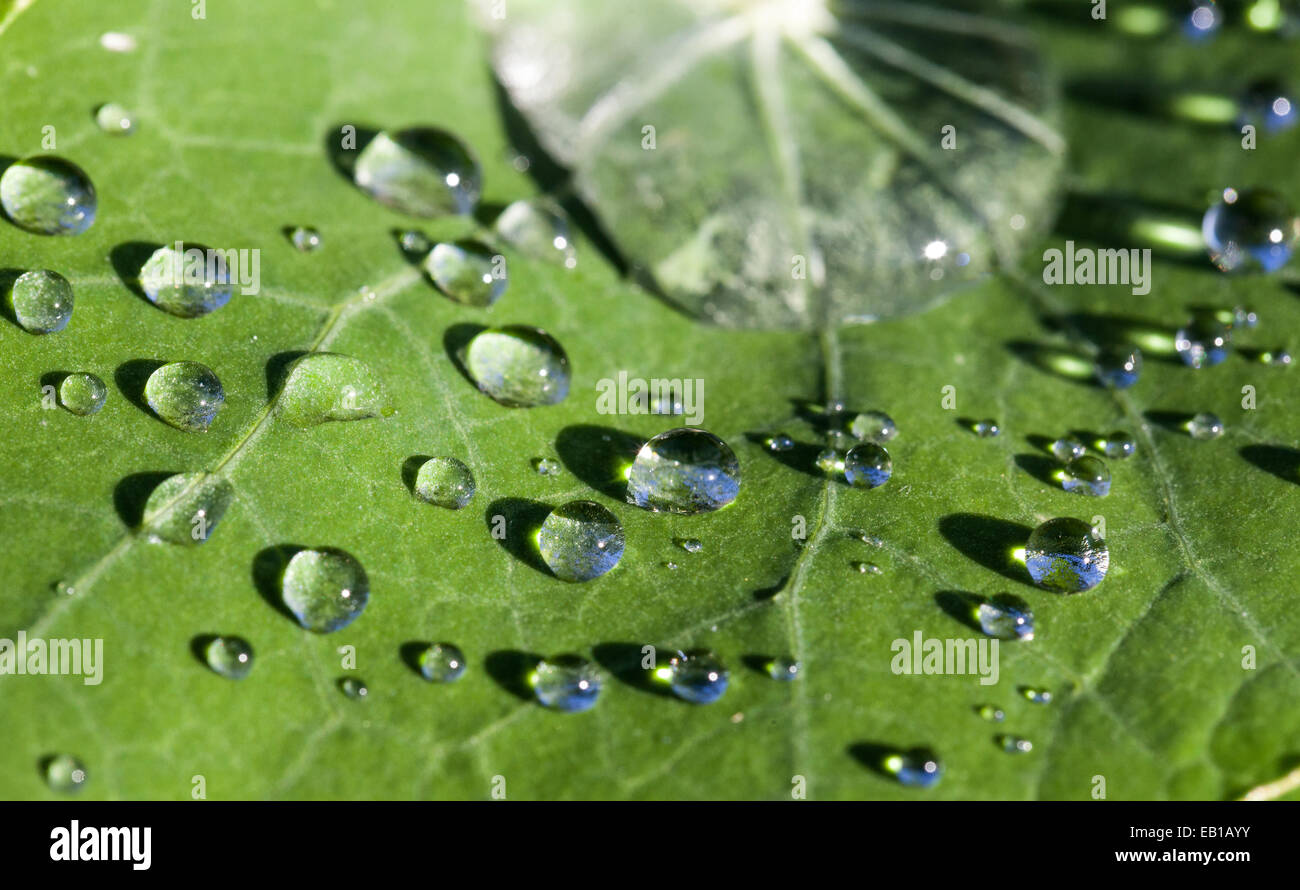 Dewdrops leave - Stock Image