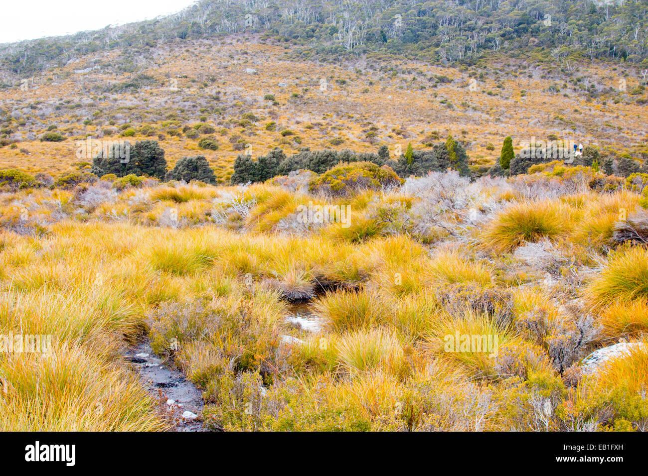 landscape in cradle mountain national park near dove lake,tasmania,australia - Stock Image