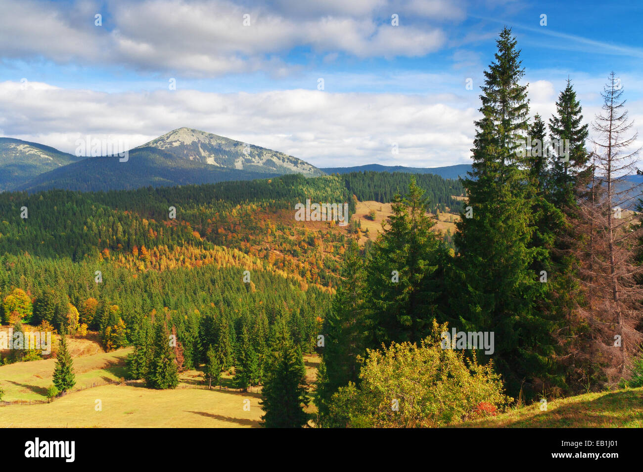 mountains landscape with fir trees - Stock Image