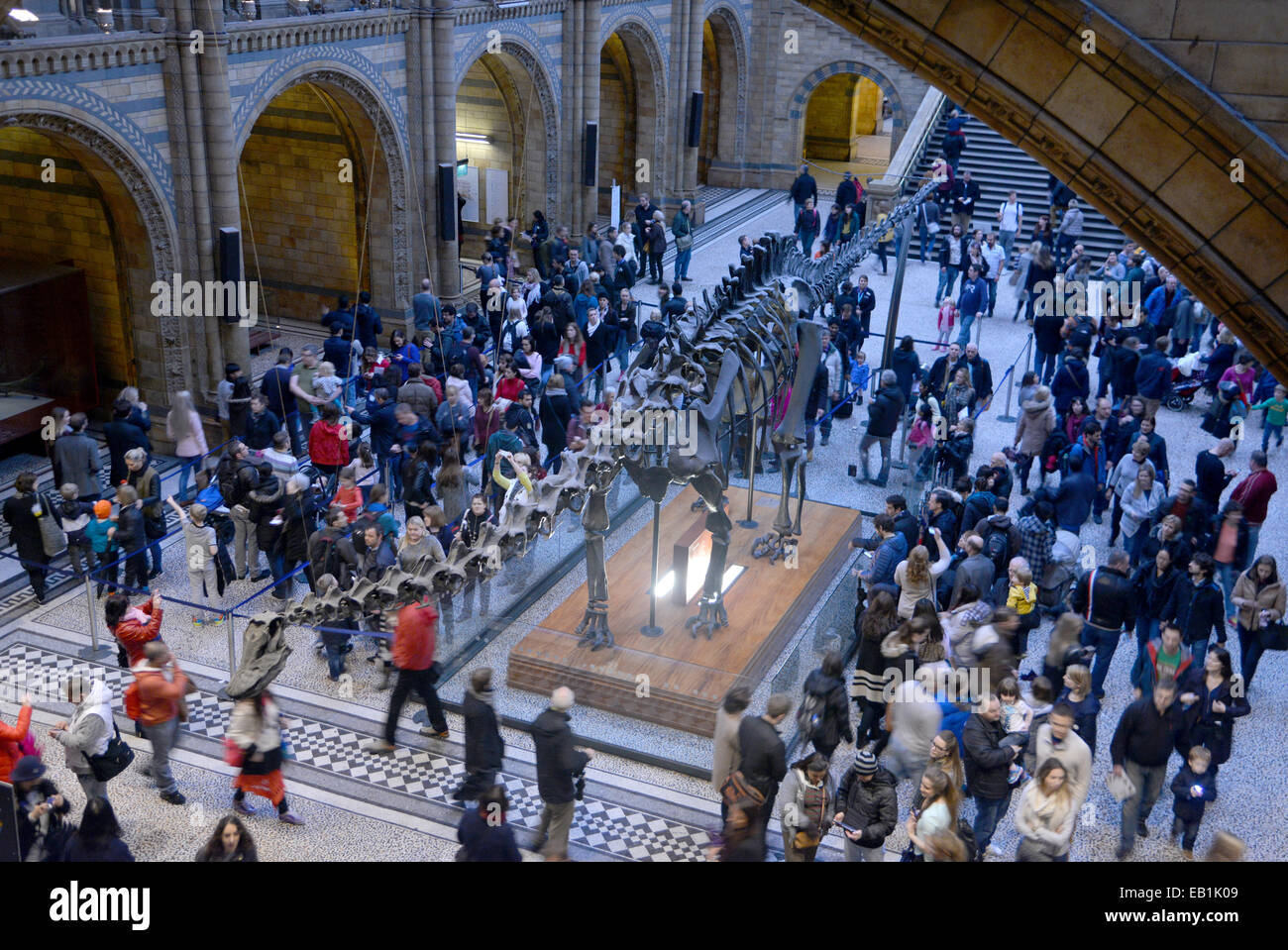Visitors crowd around the Diplodocus skeleton in entrance hall of the Natural History Museum, London - Stock Image