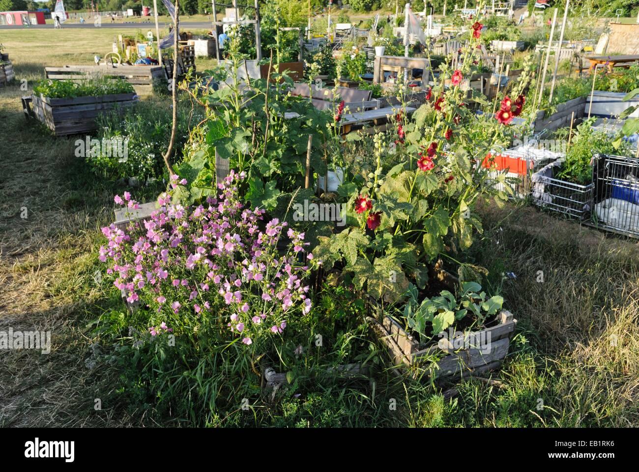 Raised beds in a community garden, Tempelhofer Freiheit, Berlin, Germany - Stock Image