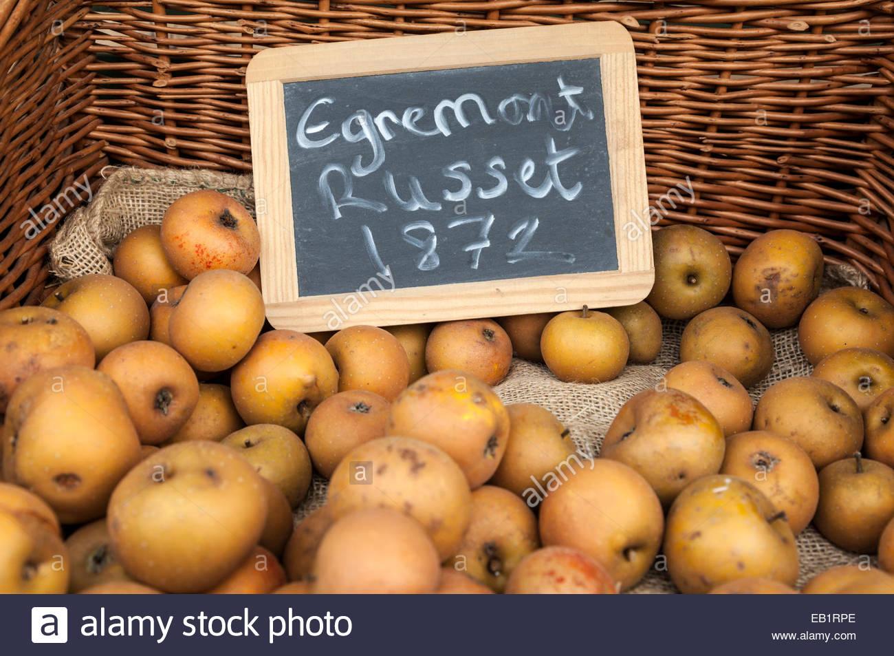 Egremont Russet Apples - Stock Image