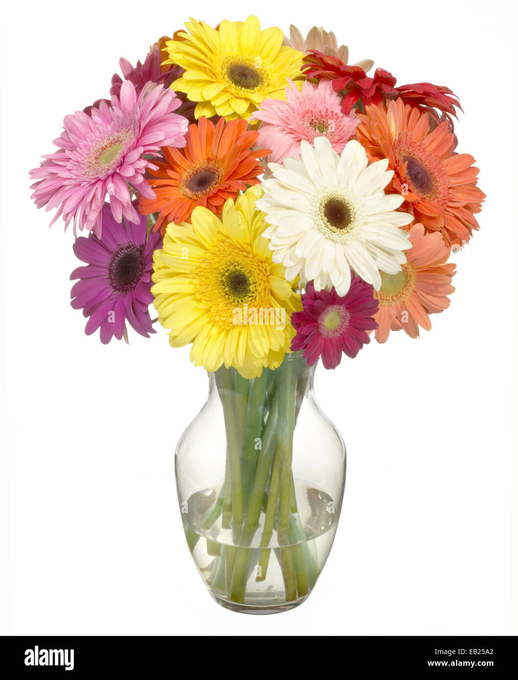 multi colored gerber daisies in a bouquet - Stock Image