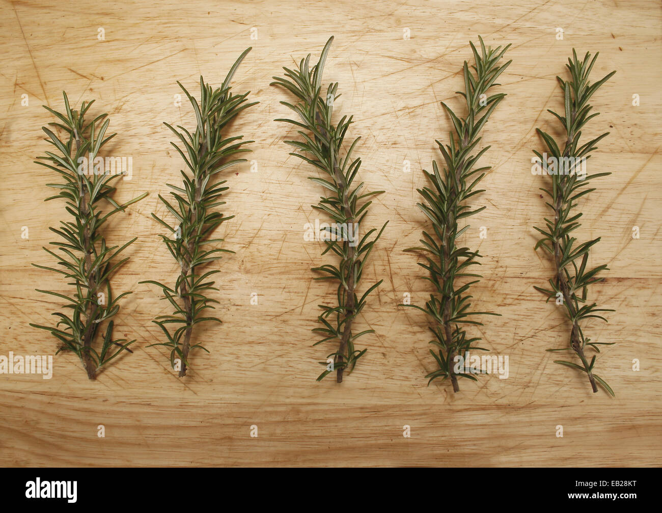 image of rosemary sprigs in kitchen Rosmarinus officinalis - Stock Image