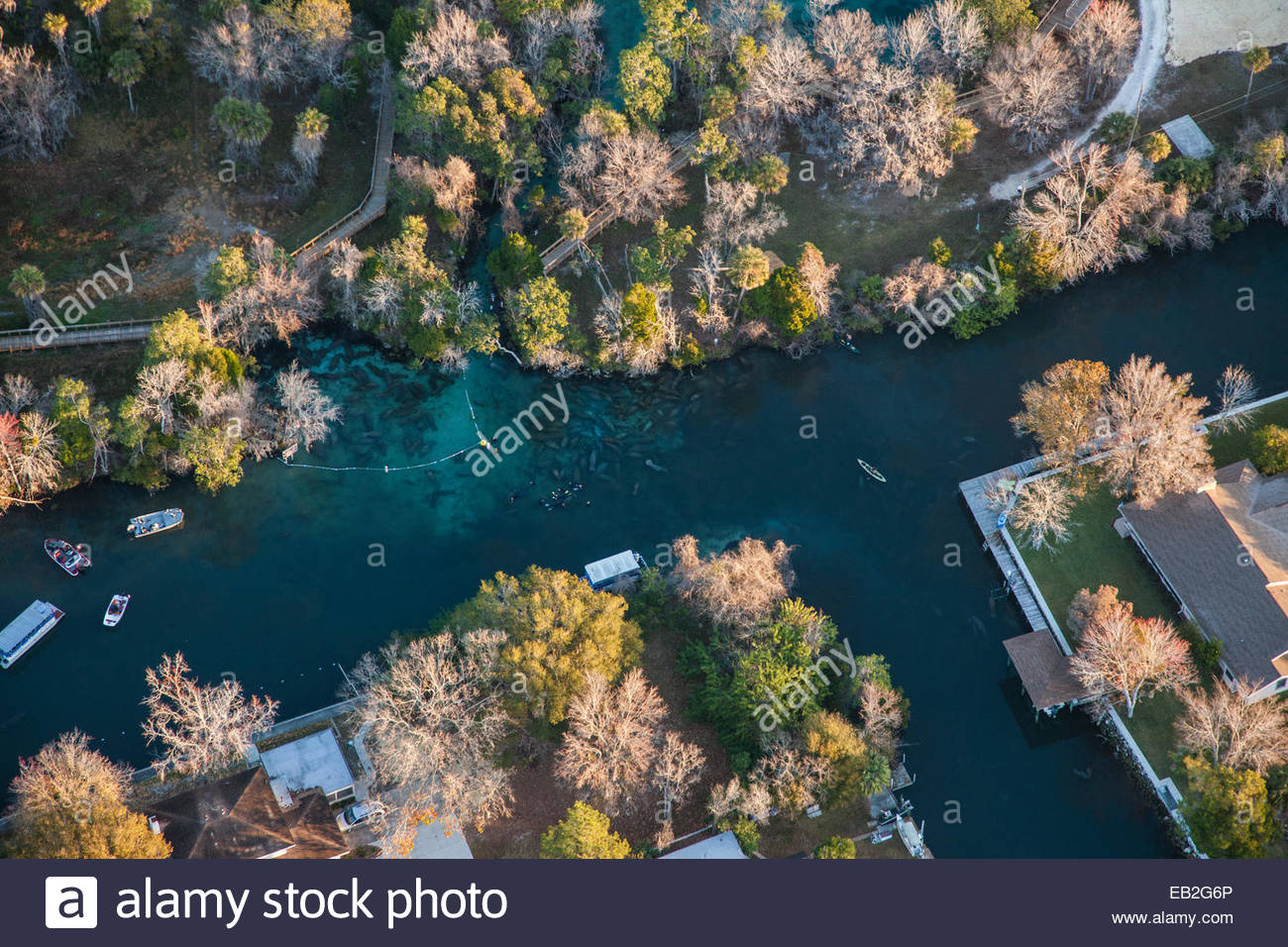 Three Sisters Springs; a heavily developed series of canals where manatees and people are forced to live together. - Stock Image