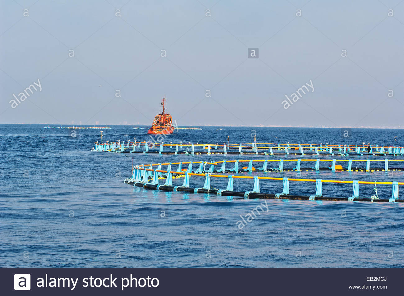 Blue fin tuna pens are being towed to a permanent anchorage where tuna are fed before harvesting. - Stock Image