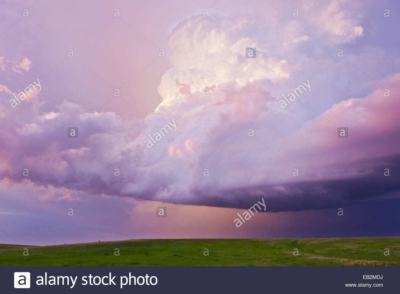 A decaying thunderstorm tinted pink and purple by sunset. - Stock Image