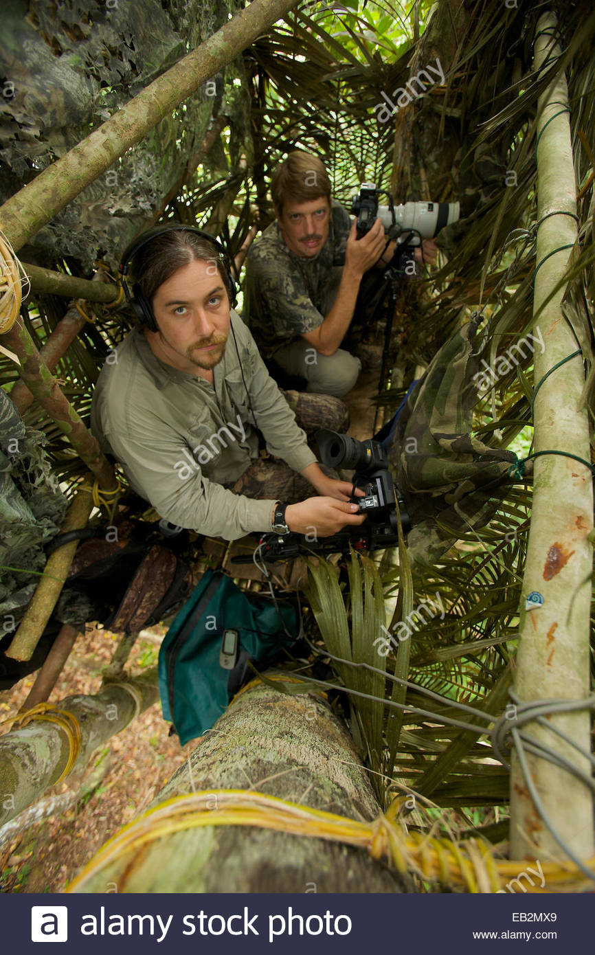 A photographer and ornithologist in a blind capture the Wallace's standardwing bird of paradise. - Stock Image