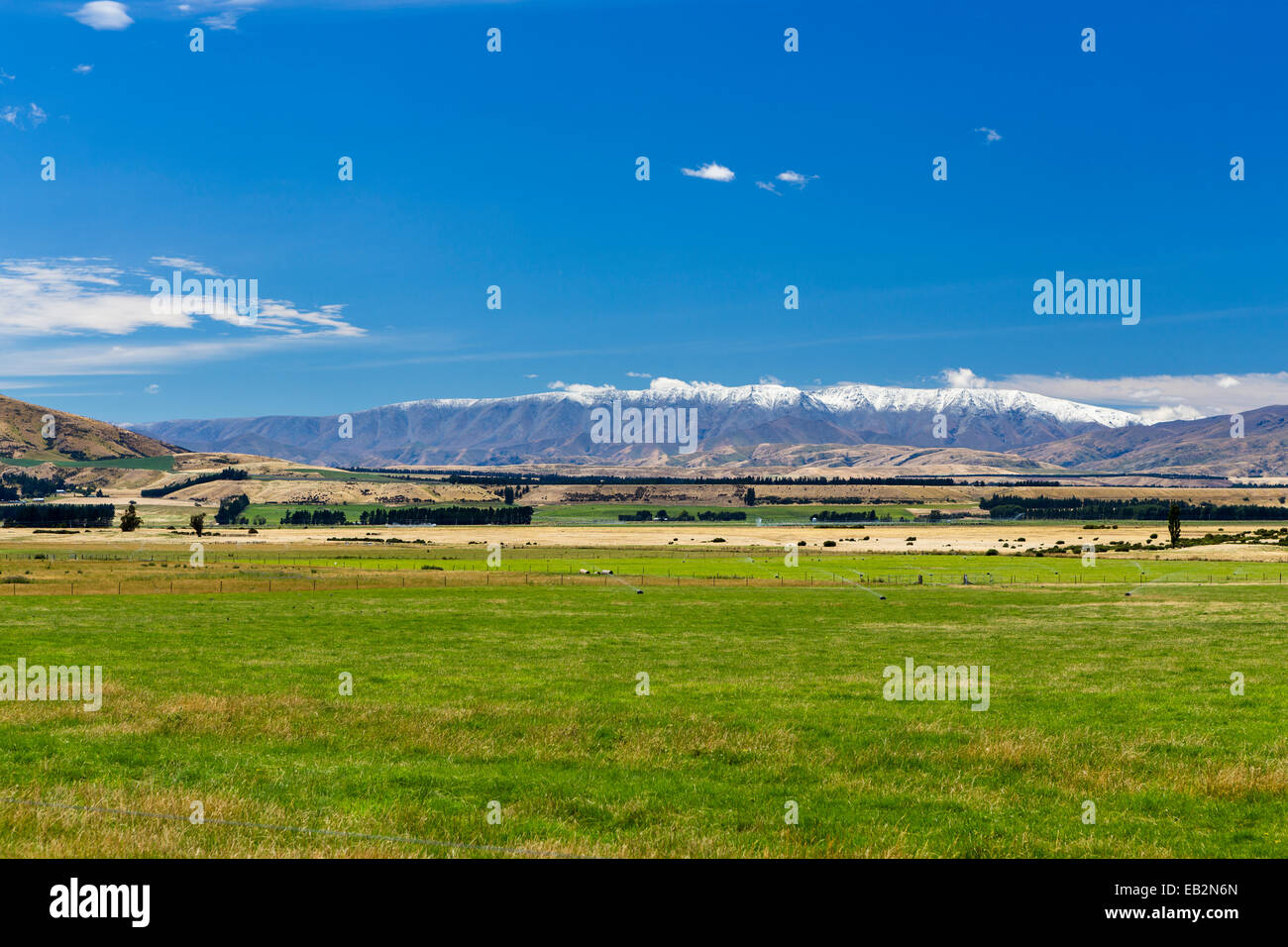 Pasture in Central Otago with the snow-capped St. Bathans Range, Queensberry, Otago Region, New Zealand - Stock Image