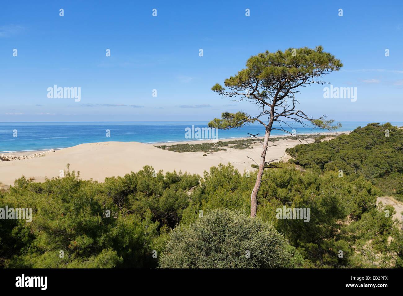 Pine tree on sand dunes, Lycian coast, Gelemiş, Mediterranean Region, Turkey - Stock Image