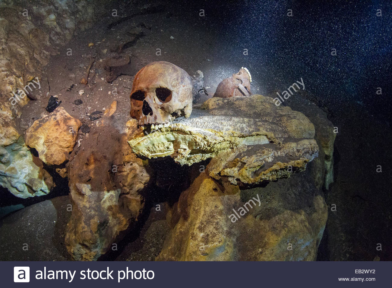Mayan and animal skulls and bones found in a sacred cenote. - Stock Image