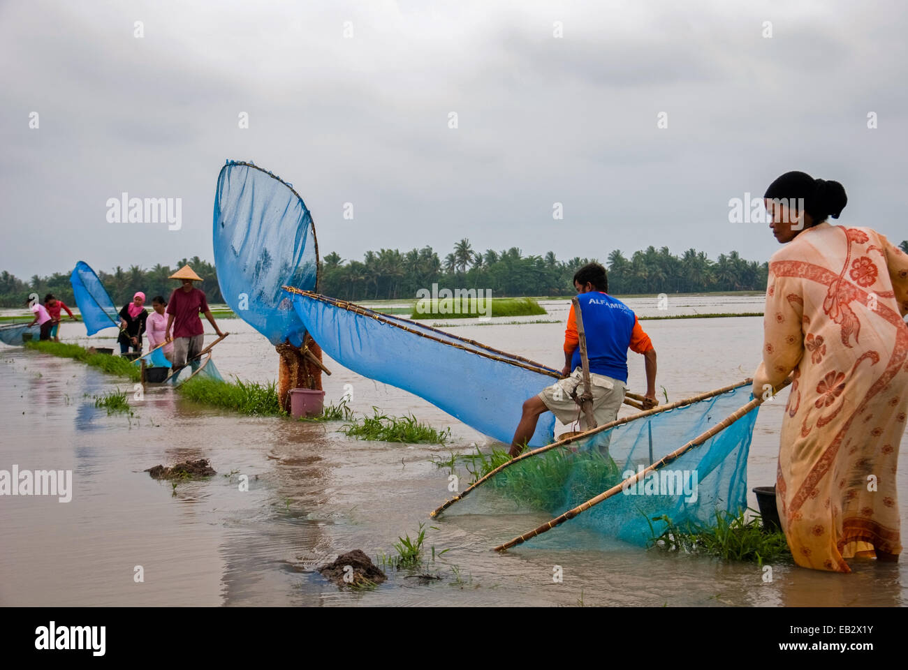 Local farmers of Karawang fishing with fish nets, an alternative for food when their rice fields flooded during - Stock Image