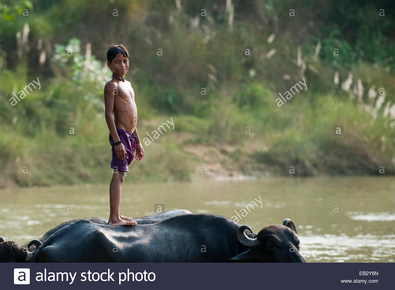 A boy messing about in the river standing on the back of a water buffalo in Nepal - Stock Image