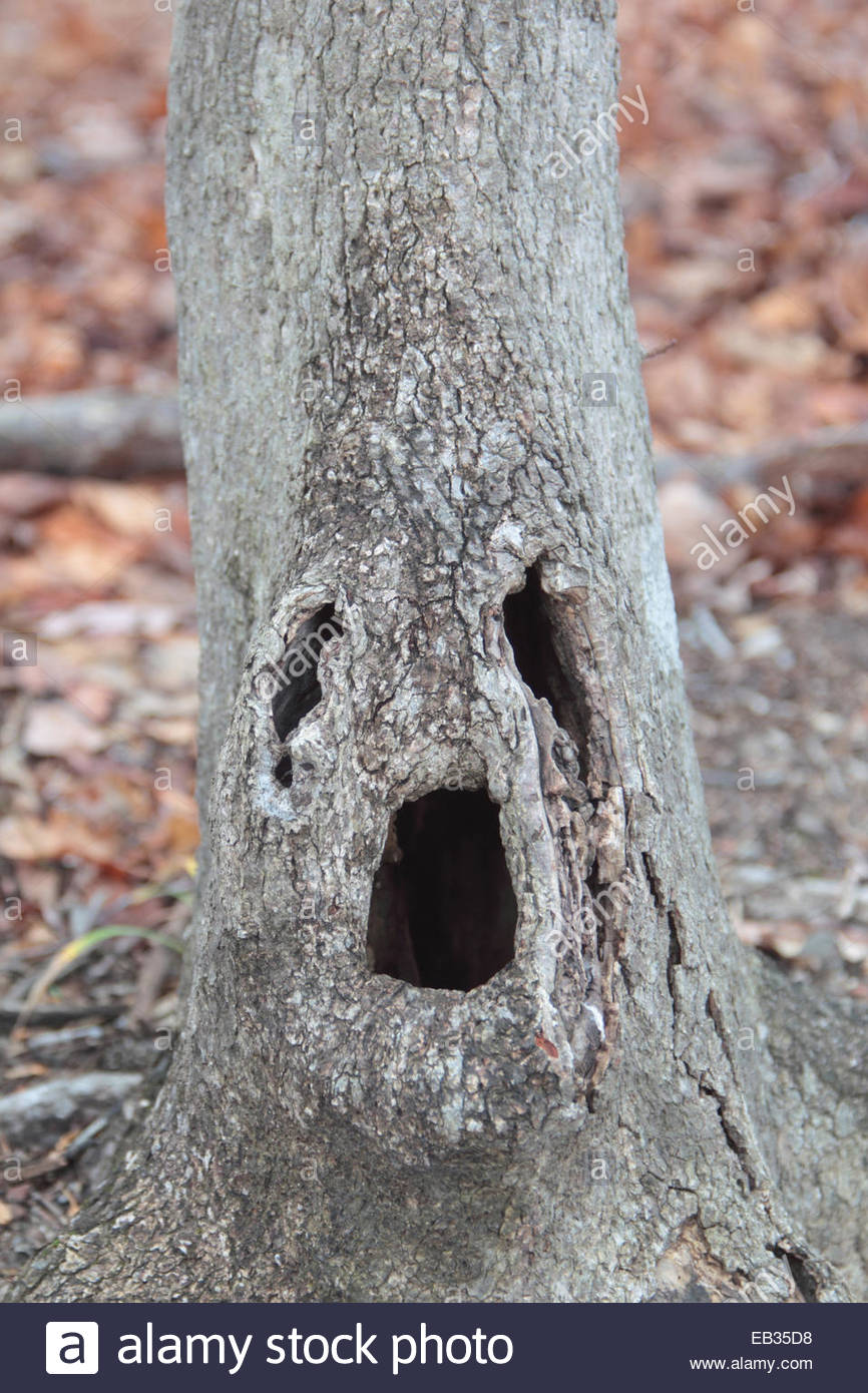 A trunk that resembles a human face. - Stock Image