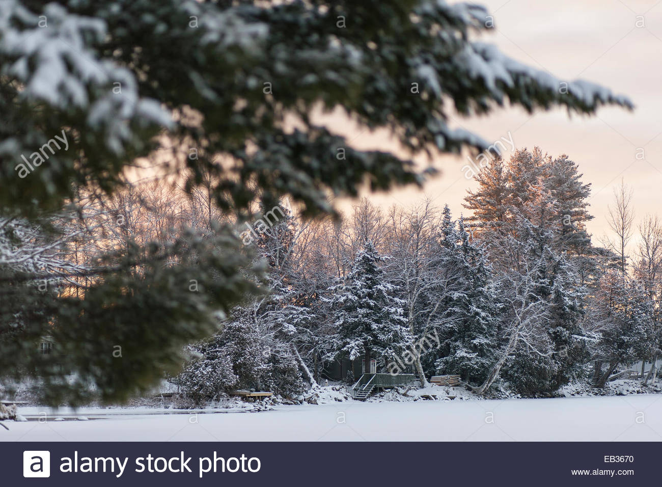 Trees along a frozen lake are covered in new snow at sunrise. - Stock Image