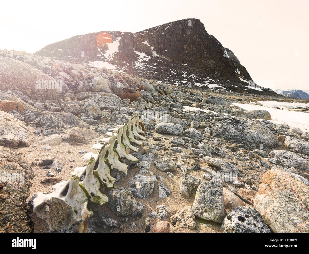 Whale bones on a rocky coast, Spitsbergen Island, Svalbard Archipelago, Svalbard and Jan Mayen, Norway - Stock Image
