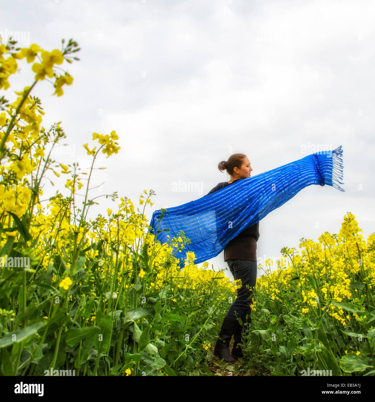 Woman holding wide blue scarf spinning in rapeseed field - Stock Image