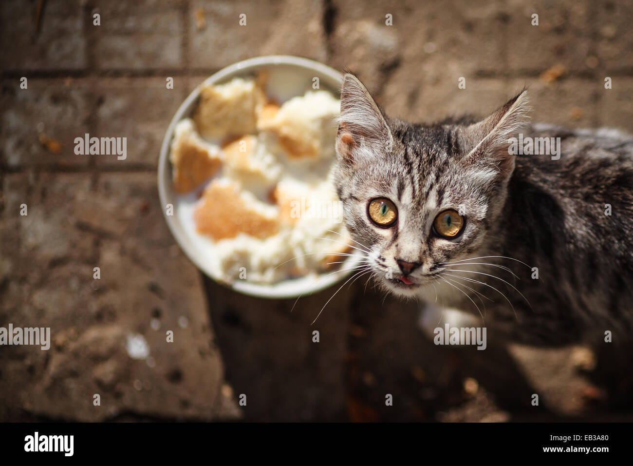 Elevated view of cat and food bowl - Stock Image