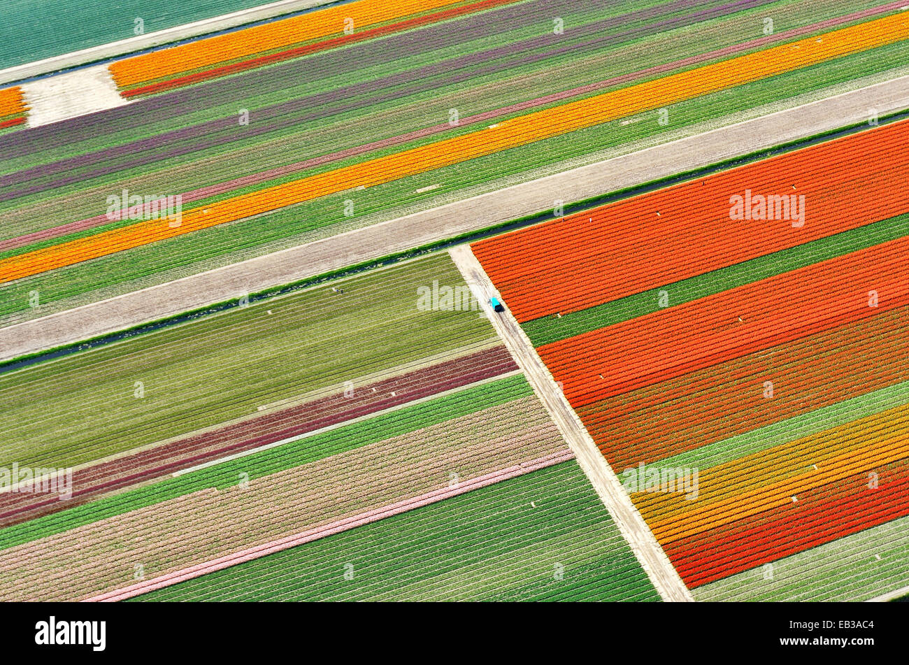 Netherlands, North Holland, Aerial view of tulip fields with turquoise van - Stock Image