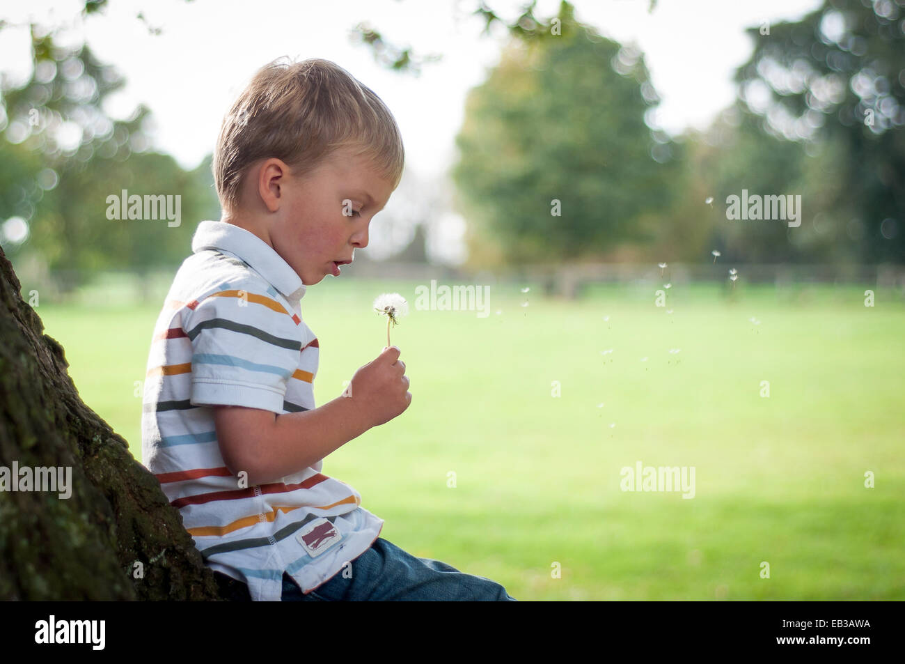 Boy leaning against tree blowing dandelion clock - Stock Image