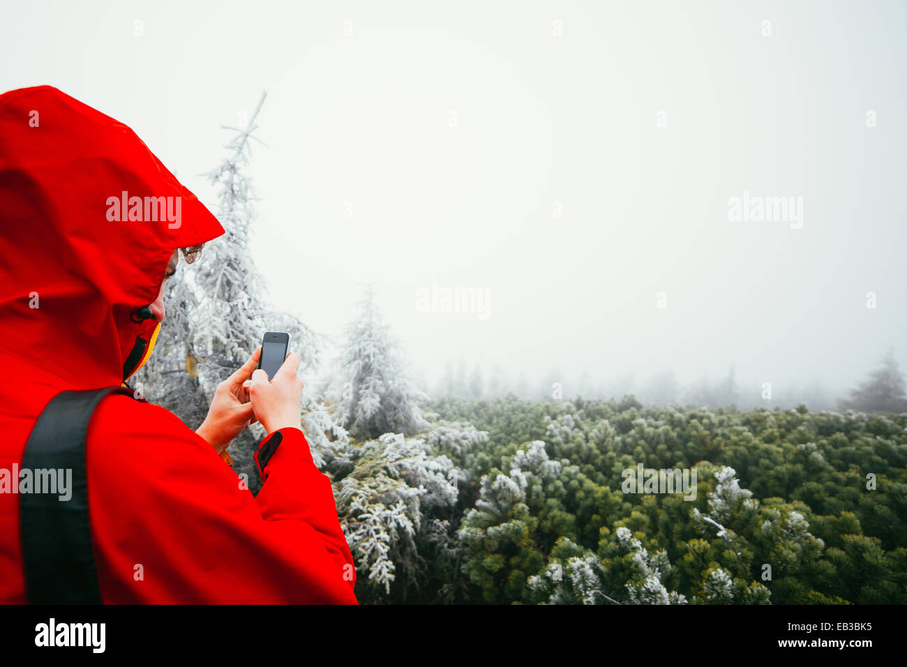 Man photographing forest - Stock Image