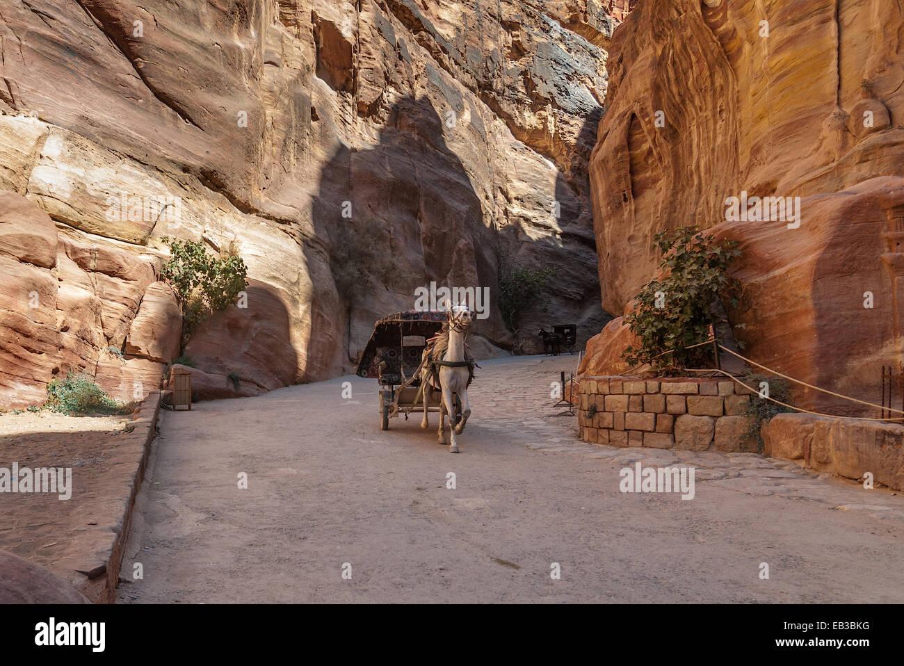 Jordan, Ma'an, Um Sayhun, Petra, Horse carriage ferries tourist - Stock Image