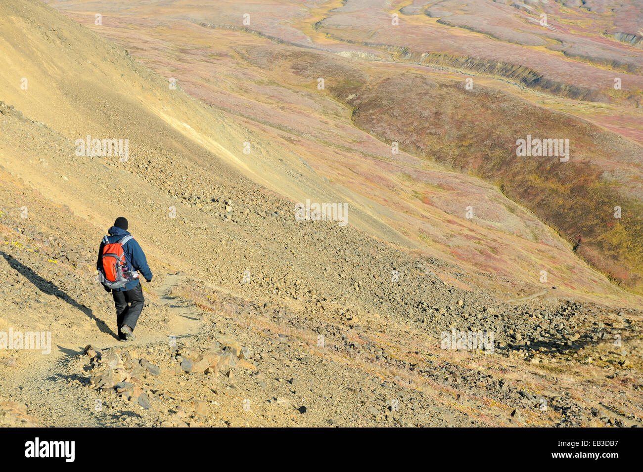 USA, Alaska, Denali National Park, Male hiker on trail - Stock Image