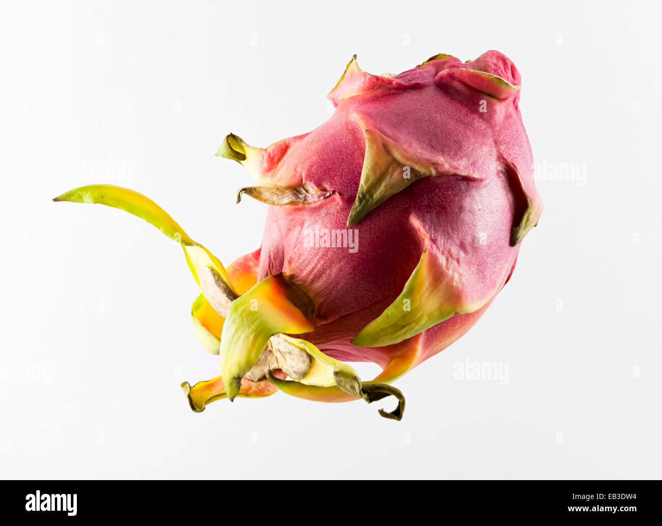 Dragon fruit, or pitahaya, a tropical fruit of the genus Hylocereus - Stock Image