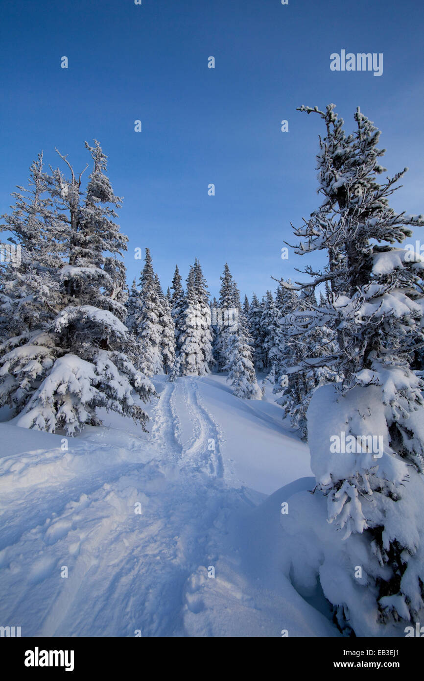Tracks and trees on snowy hillside - Stock Image