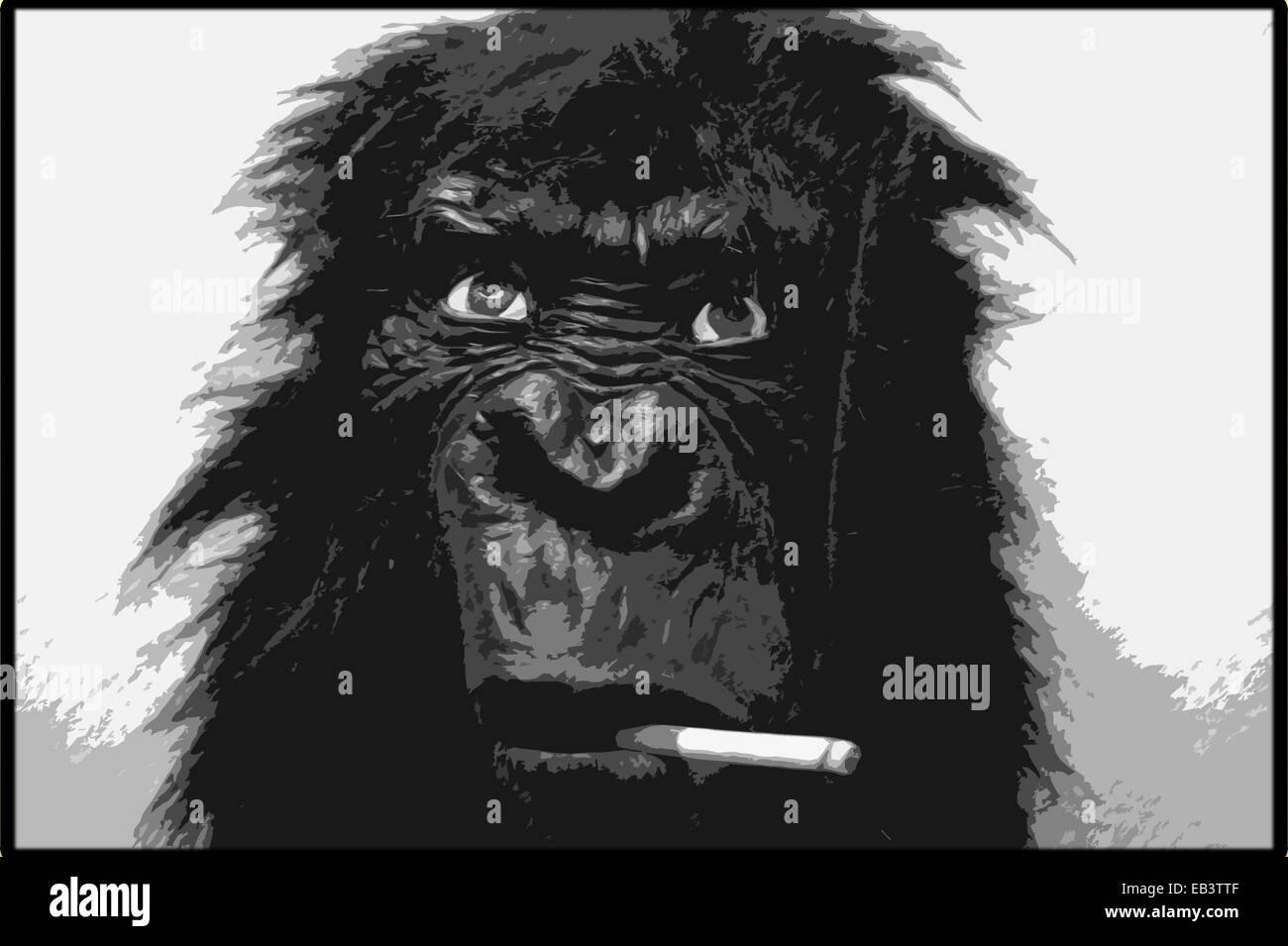 Studio Work, Monkey with Cigarette, Hamburg, Germany. - Stock Image
