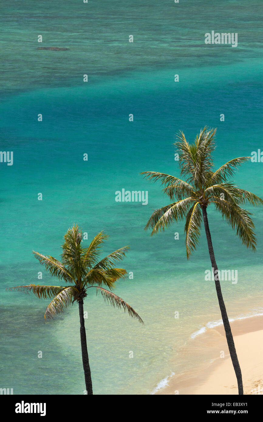 Fort DeRussy Beach and palm trees, Waikiki, Honolulu, Oahu, Hawaii, USA - Stock Image