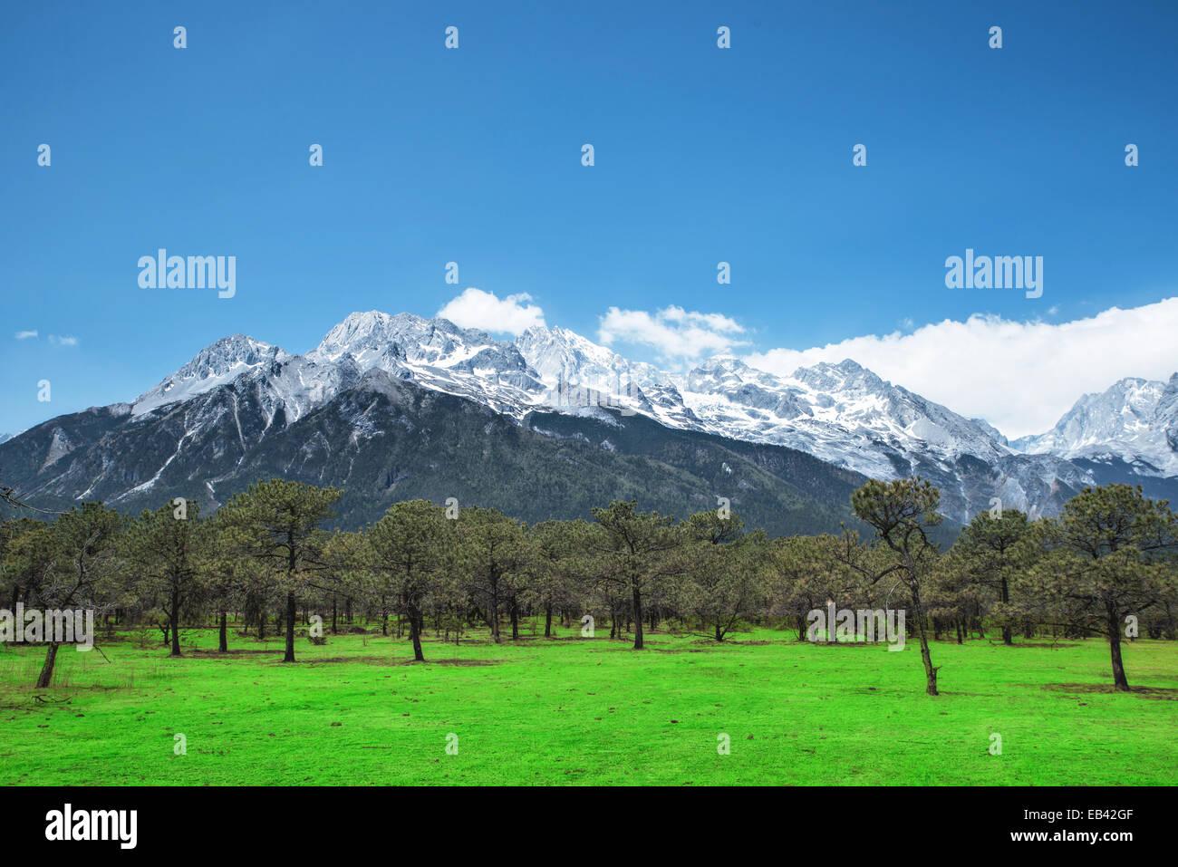 Pine forest and Jade Dragon Snow Mountain, Lijiang, Yunnan China. Stock Photo