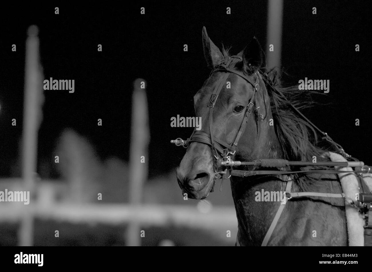Horse Race at the Meadowlands - Stock Image