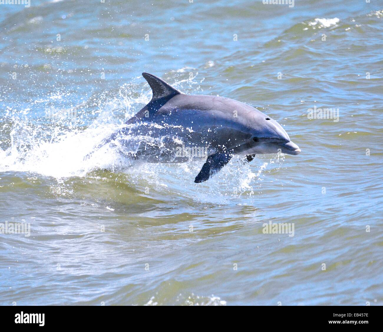 Dolphin watching - Stock Image