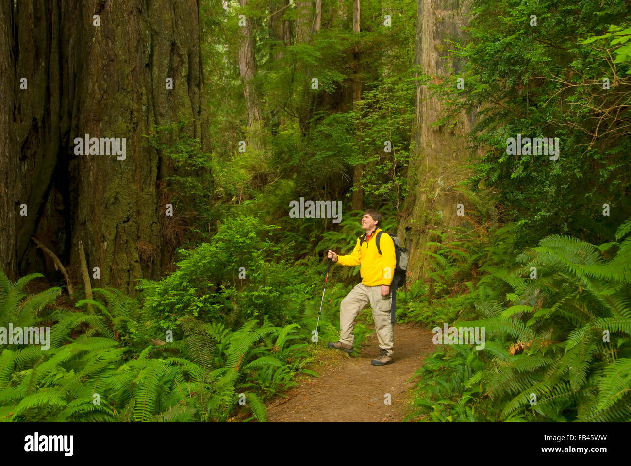 Trillium Falls Trail, Redwood National Park, California - Stock Image