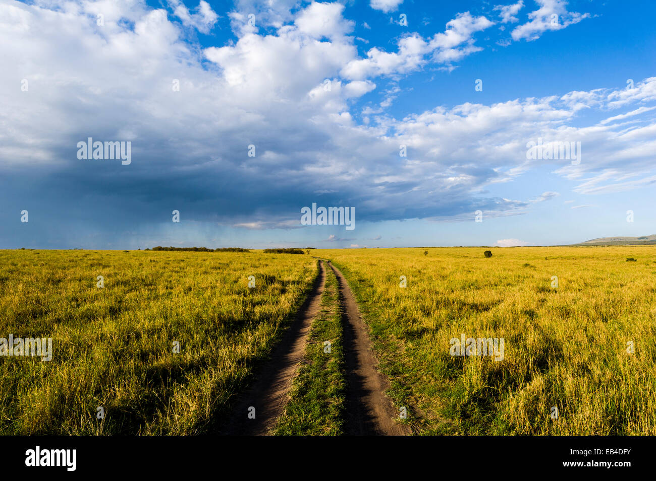 A set of 4wd vehicle tracks disappear across a savannah plain towards the horizon at sunset. - Stock Image