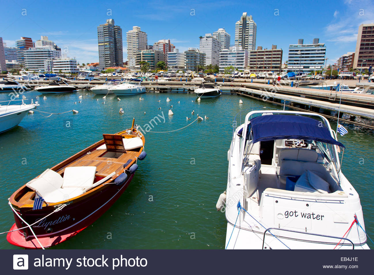 Fancy boats tied up at a city marina with a beautiful view of the Punta del Este skyline. - Stock Image