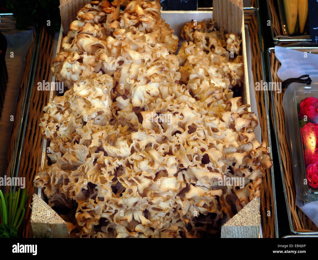 Mushroom Pils Fungi  Deutschland Krause Glücke in Munich Viktualienmarkt Viktualien market - Stock Image