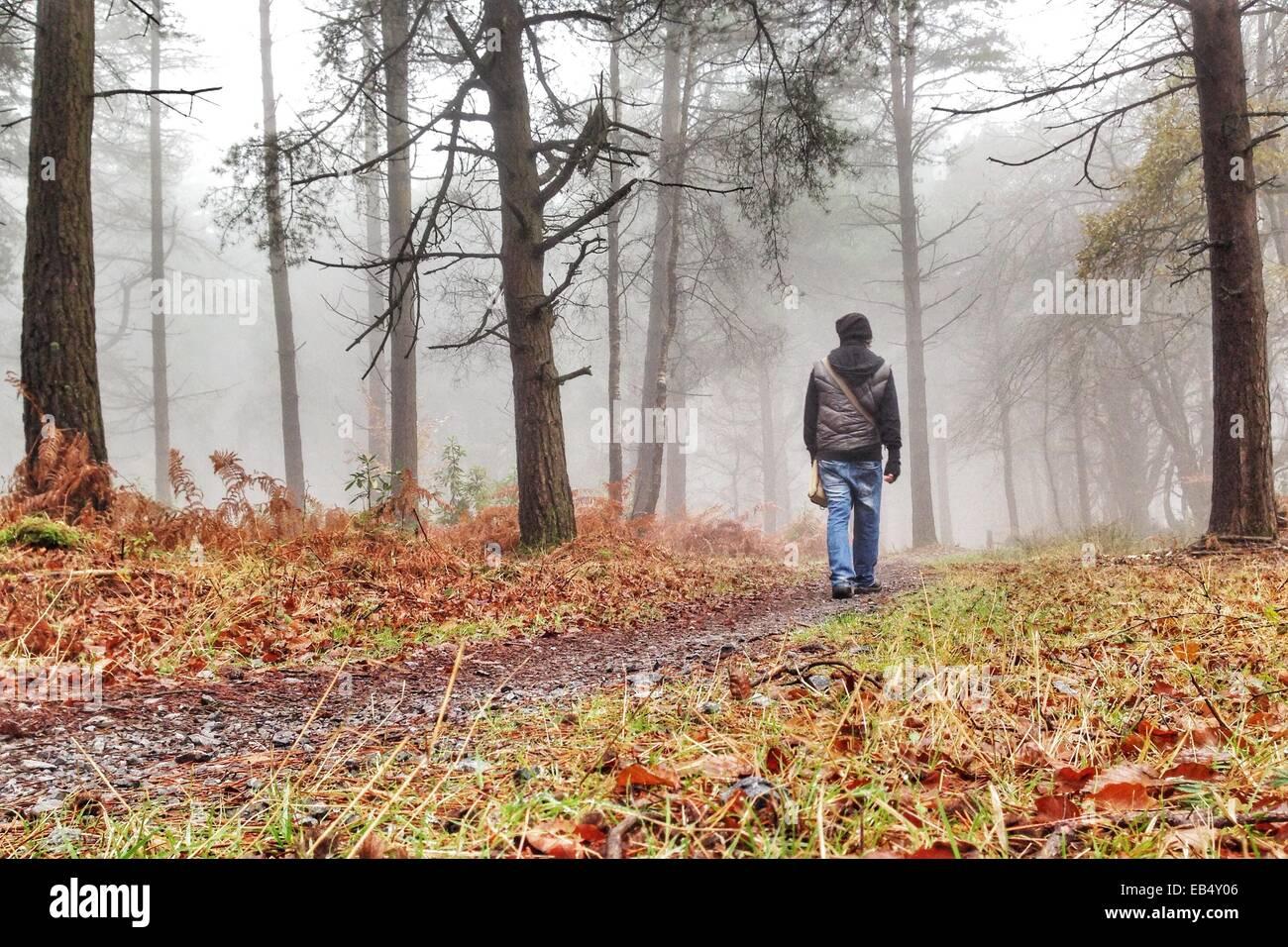Haldon Forest, Devon, UK. 26th November, 2014. UK weather. Autumnal fog in Haldon Forest. Credit: nidpor/Alamy Live - Stock Image