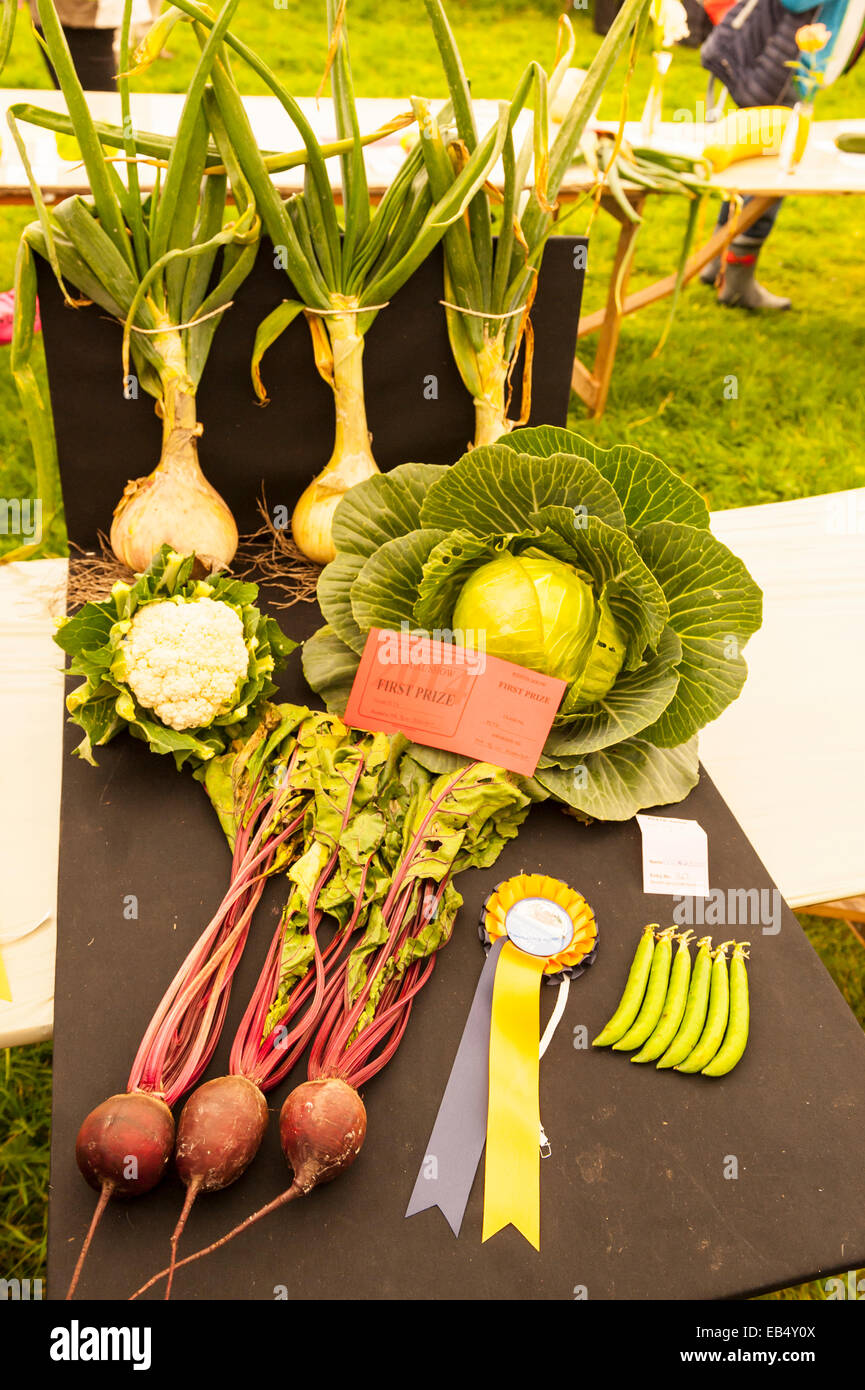 A competition for the best home grown vegetables at Reeth show , Swaledale in the Yorkshire Dales in Yorkshire , - Stock Image