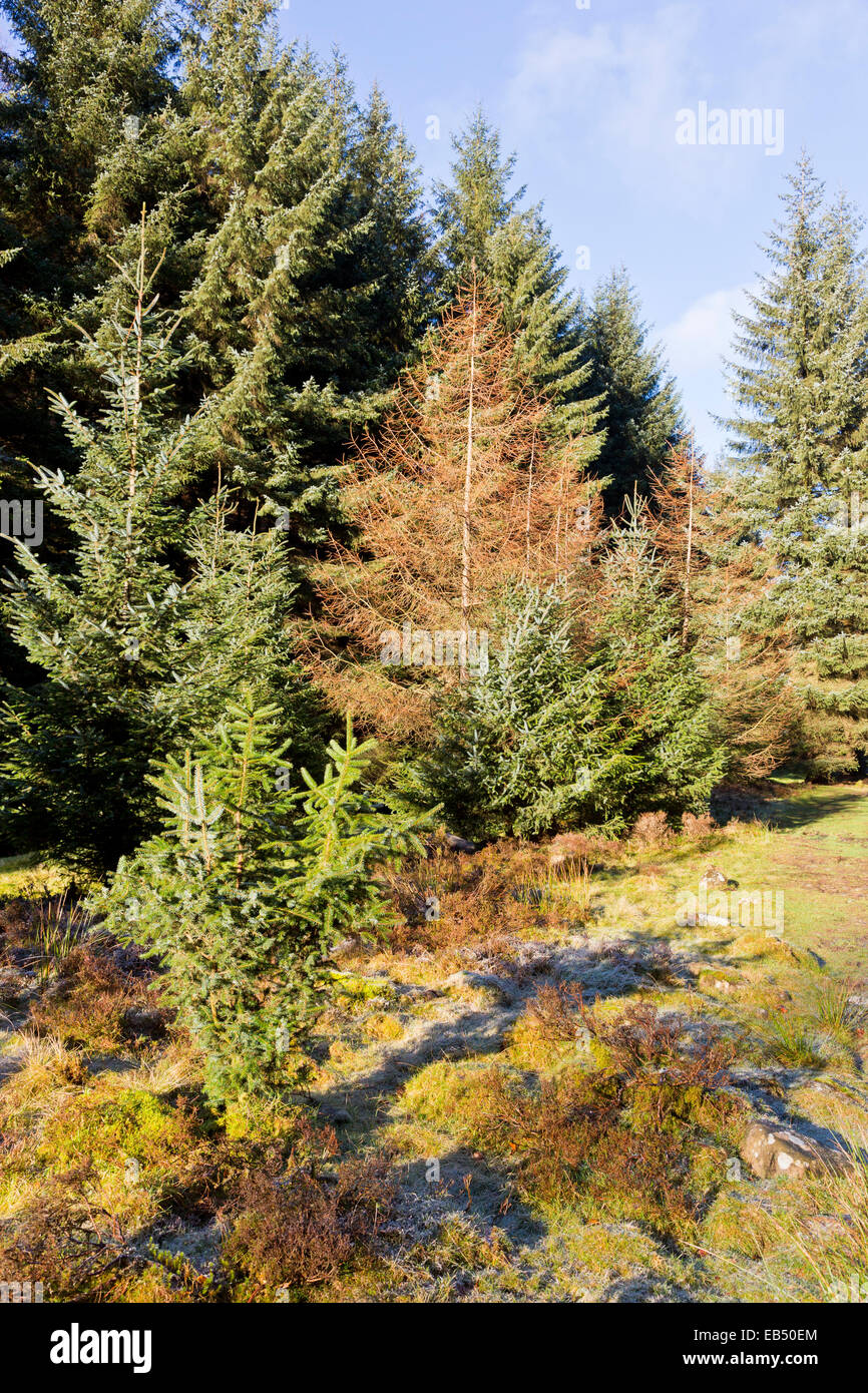 Woodland scene at Lady Clough in the Peak District Derbyshire - Stock Image