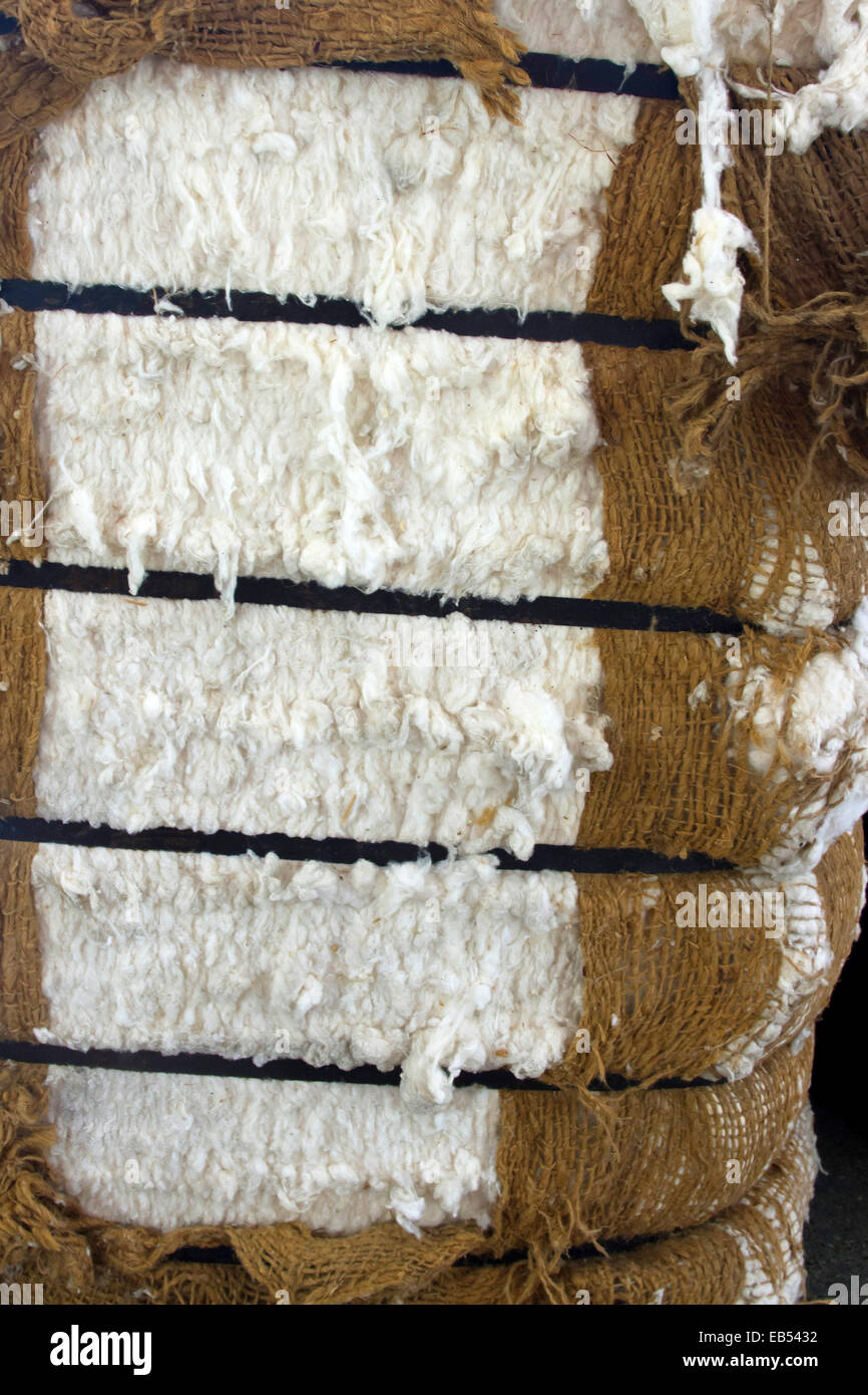 Bale of raw, unprocessed cotton - Stock Image