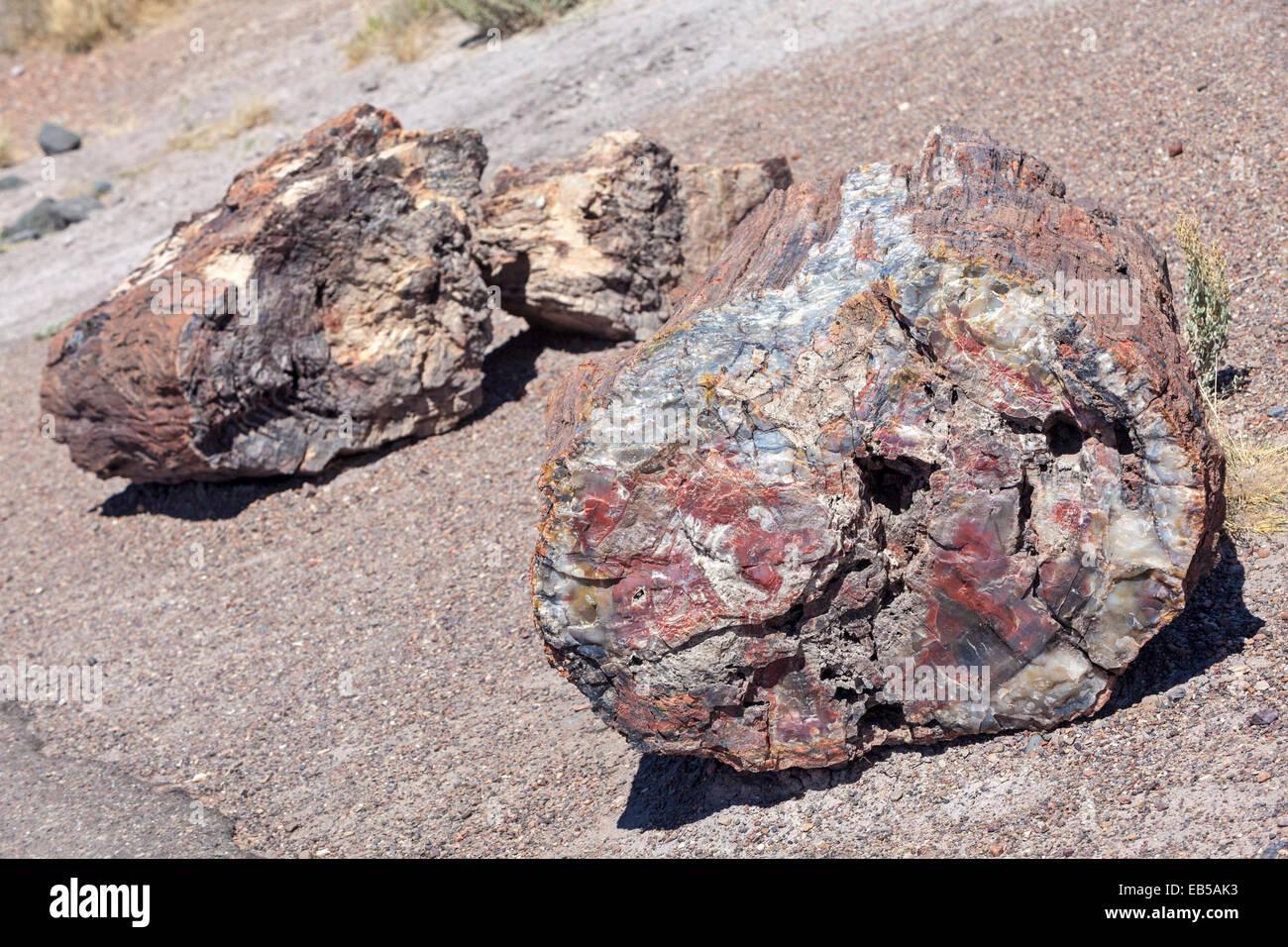 Petrified wood in the Petrified Forest National Park, Arizona. - Stock Image