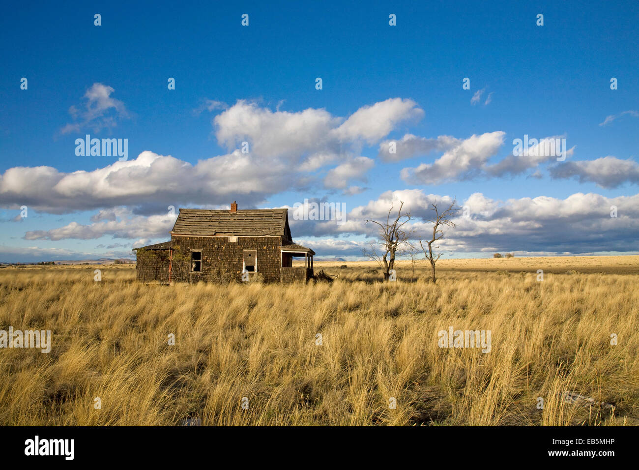 A Depression era farm house in an abandoned wheat field near Madras, Oregon, circa 1920s - Stock Image