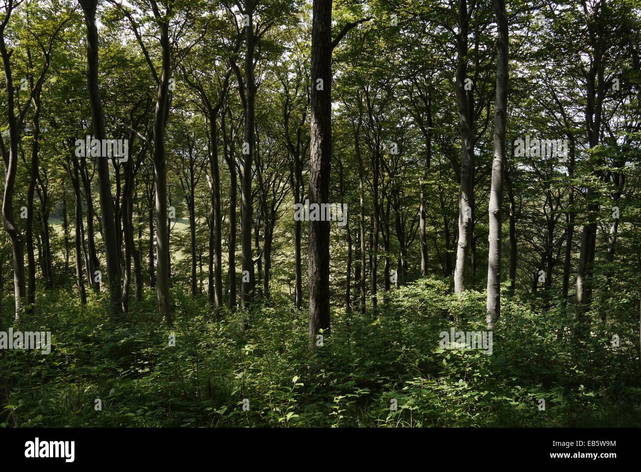 Beautiful forest in atmospheric light - Klassische, atmosphärische Wald-Szenerie in den Schweizer Jurabergen Stock Photo
